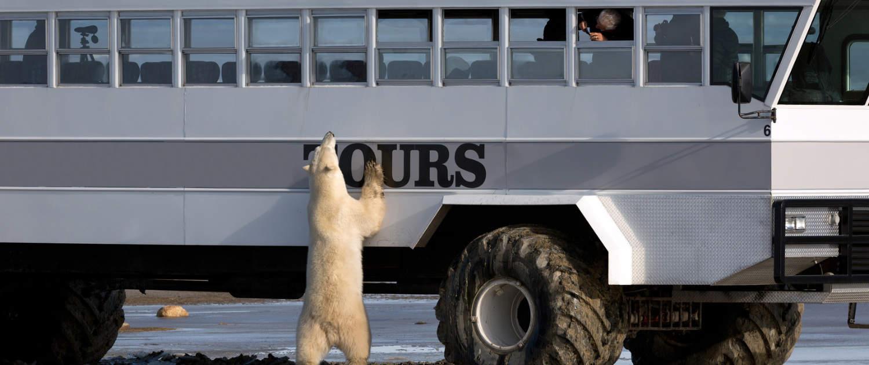 Verstärkte Stoßdämpfer für Busse – bärenstark!